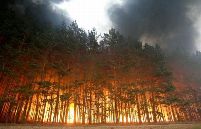 Картинки по запросу пожежа в природних екосистемах