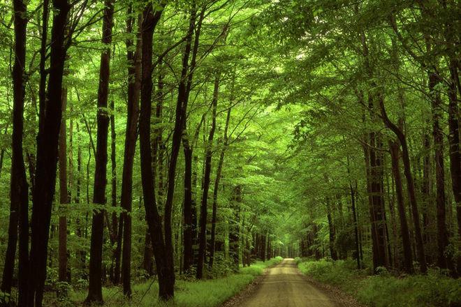 Івано-Франківська область є однією з найбільш лісистих в Україні