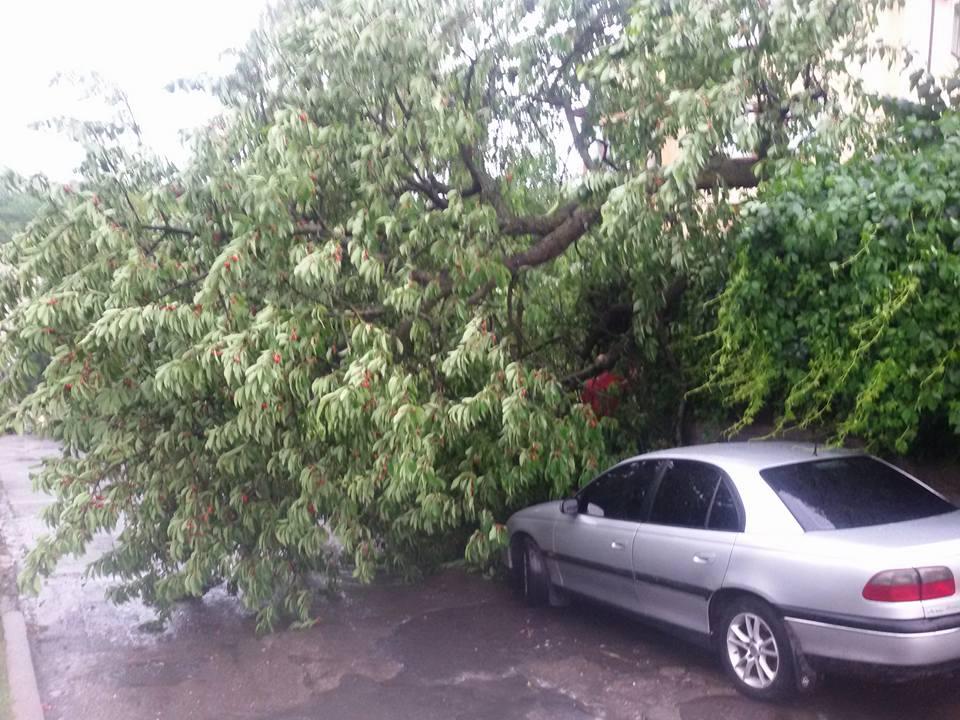 Негода вУкраїні: наПрикарпатті дерево травмувало хлопчика